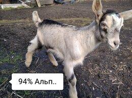 Сельскохозяйственные животные - Альпийские козлики., 0