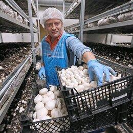 Рабочие - Вахта с питанием и проживанием от 15 смен. Сборщик грибов, 0