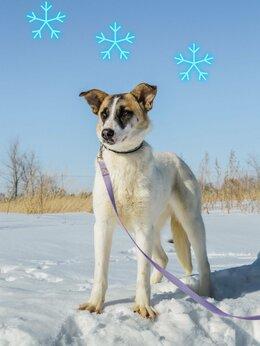 Собаки - Милашка Марта ждёт своих хозяев, 0