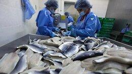 Разнорабочий - Разнорабочие на рыбное производство (вахта в…, 0