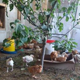 Птицы - Продаются цыплята , 0