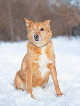 Собаки - Небольшая Нелли ищет дом , 0