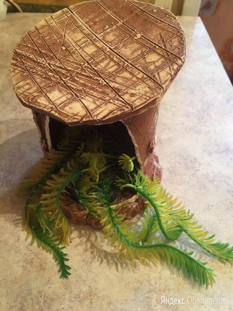Набор грунтовых коряг для аквариума по цене 300₽ - Декорации для аквариумов и террариумов, фото 0