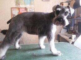 Груминг и уход - Стрижка и тримминг собак  круглый год, 0