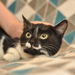 Кошки - Скромная малышка кошка Буся, 0