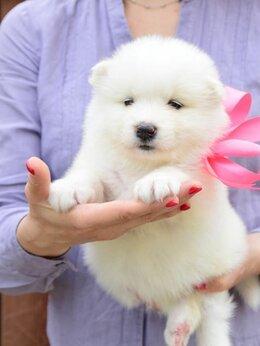 Собаки - Самоедская лайка щенки самоеда, 0