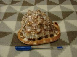 Статуэтки и фигурки - Ципрекассис: ракушка, большая, 15 см. Идеальное…, 0