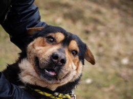 Собаки - Плюшевая Линда, 0