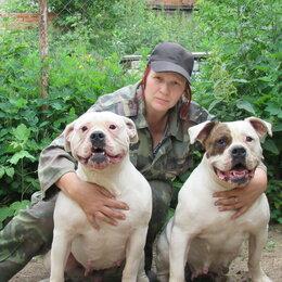 Собаки - Инструктор по ОКД., 0