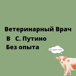 Работа с животными - Ветеринарный врач (с. Путино), 0