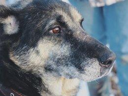 Собаки - Бывшедомашний Эйнштейн, приучен к выгулу и ищет…, 0