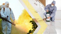 Бытовые услуги - Уничтожение тараканов, клопов, блох. Дезинфекция, 0