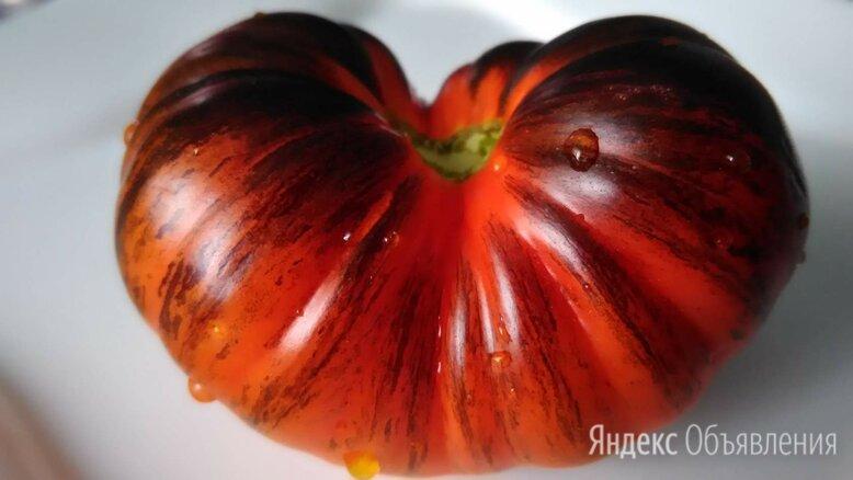 Семена томатов по цене 15₽ - Семена, фото 0