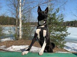 Собаки - Василису предали хозяева, ей очень нужен дом, 0