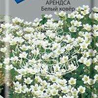 Дизайн, изготовление и реставрация товаров - Камнеломка Аренса Ковер (Белый ковер) (Поиск), 0
