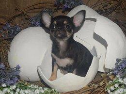 Собаки - Мини куколка, 0