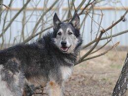 Собаки - Скромный Тайгер в поисках семьи, 0
