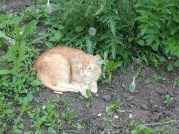 Кошки - Отдам котов в добрые руки , 0