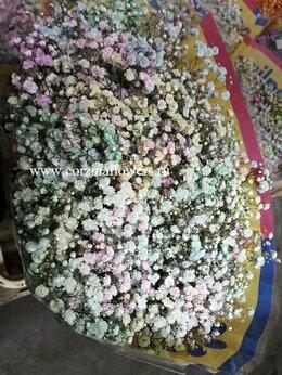 Цветы, букеты, композиции - Гипсофила краш. Рейнбоу 25 штук букет, 0