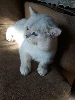 Кошки - Голубоглазый красавец, 0