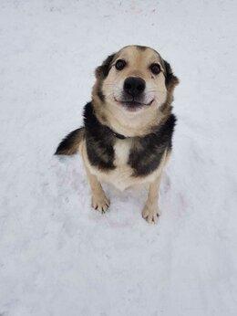 Собаки - Чудесный пёсик Рони очень нуждается в хозяине,…, 0