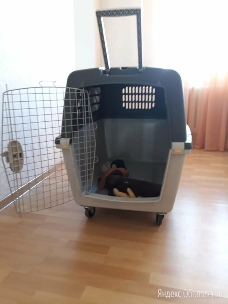 Перевозка для собак крупных пород по цене 14000₽ - Транспортировка, переноски, фото 0