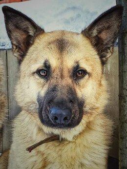 Собаки - Локки 2 года в добрые руки, 0