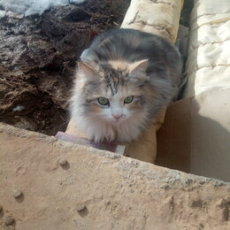 Кошки - Пушистая красавица живёт в теплотрассе и ищет ответственную семью! , 0