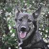 Небольшая собачка ищет дом  по цене даром - Собаки, фото 5
