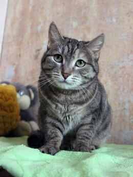 Кошки - Кошка Звезденя, 0