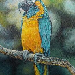 Картины, постеры, гобелены, панно - Попугай ара. Птица, масло,природа,яркий,лето,картина, 0