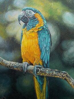 Картины, постеры, гобелены, панно - Попугай ара. Птица,…, 0
