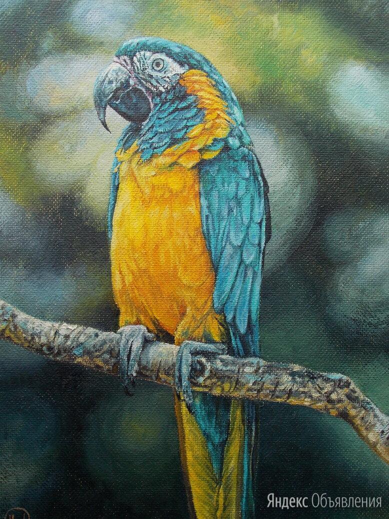 Попугай ара. Птица, масло,природа,яркий,лето,картина по цене 1300₽ - Картины, постеры, гобелены, панно, фото 0