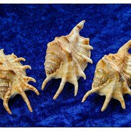 Декорации для аквариумов и террариумов - Две морские ракушки, 0
