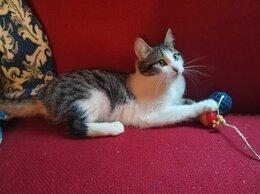 Кошки - Котята даром, 0