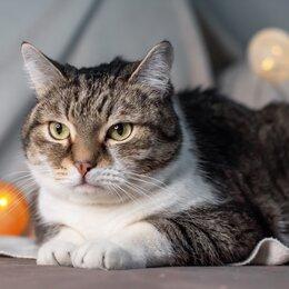 Кошки - Кот в добрые руки , 0