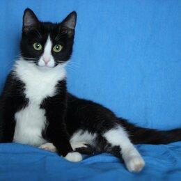 Кошки - Чёрно-белая кошечка, 0