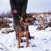 Мишутка ищет дом  по цене даром - Собаки, фото 2