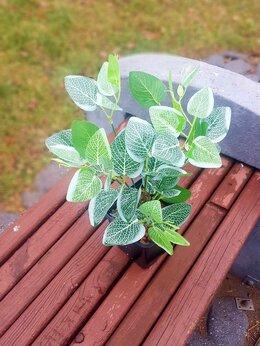 Искусственные растения - Искусственные растения Фитонния, 0