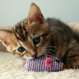 Кошки - Бенгальский лучик , 0
