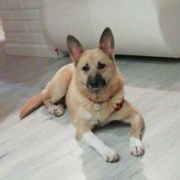 Собаки - Миниатюрная Феня ищет новую семью и дом, 0