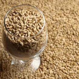 Ингредиенты для приготовления напитков - Солод Pale Ale (Курский солод), 0