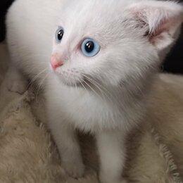 Кошки - Отдам кота в добрые руки, 0