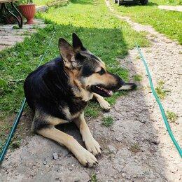 Собаки - Продаю щенков восточно-европейской овчарки цена 20000 руб, 0