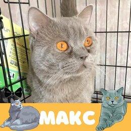Кошки - Кот Макс, 0