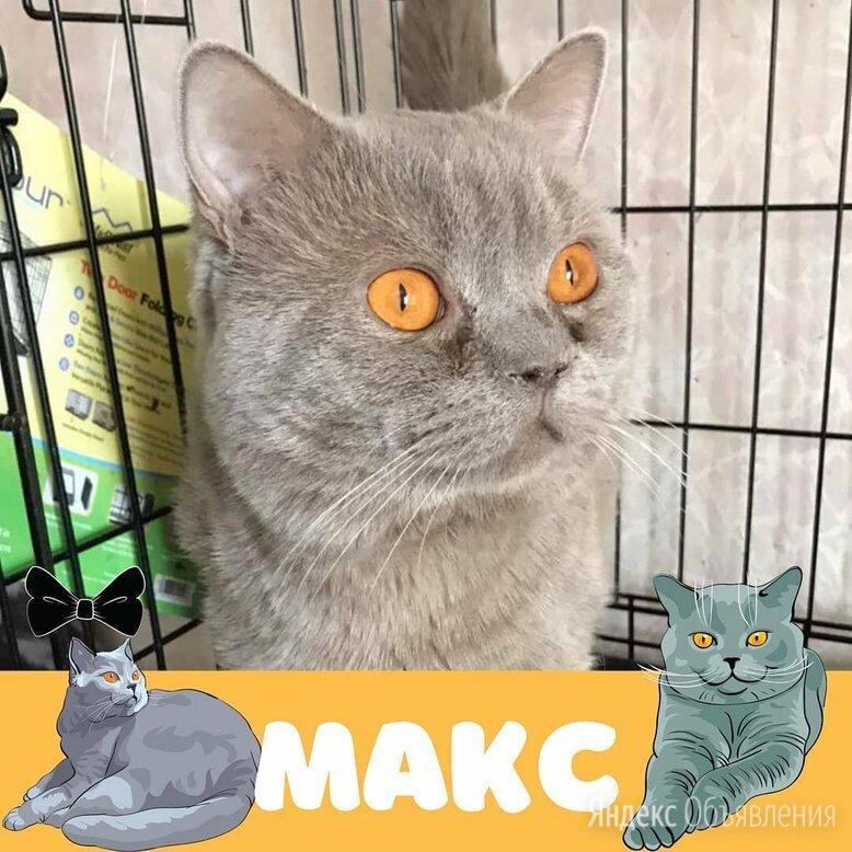 Кот Макс по цене даром - Кошки, фото 0