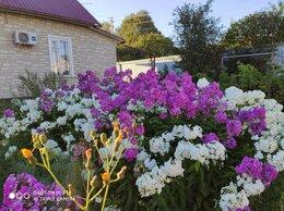 Рассада, саженцы, кустарники, деревья - Цветы для сада многолетние, 0