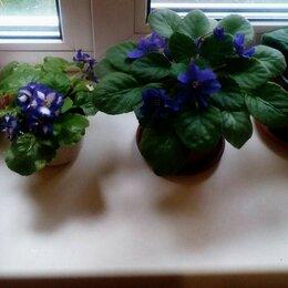 Комнатные растения - Комнатные растения., 0