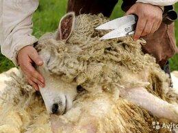 Груминг и уход - Ножницы для стрижки овец - 25 см, 0