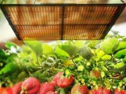 Аксессуары и средства для ухода за растениями - Фитолампа quantum board полный спектр 400 Вт, 0